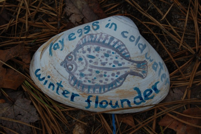 Winter Flounder lay eggs in cold water: March/April