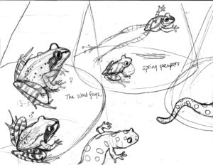 Sketch for SAFE CROSSING: amphibian portraits Left page