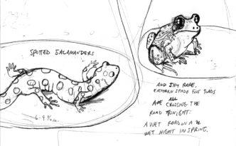 SC_speciesportraits_sketch(rightside)72