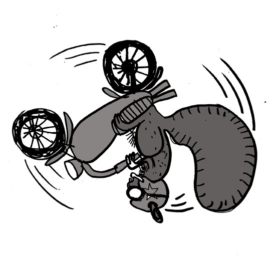 flip_bike_squirrel_72