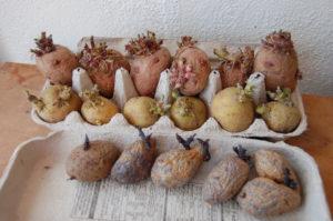 potatoesreadyforspring